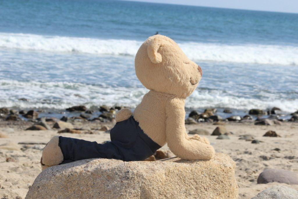 Meddy Teddy up dog on beach